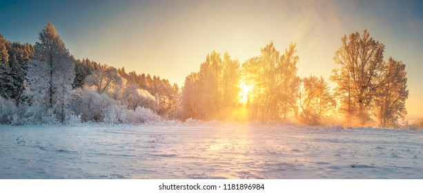 Winter nature landscape. Morning winter scene. Panorama with frosty trees in sunlight. Sunbeams through snowy trees. Christmas background. Beautiful wild   winter nature on sunrise.