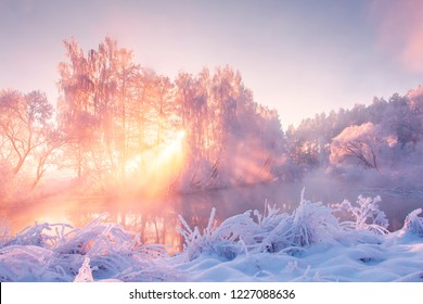 Winter nature landscape in pink morning sunlight. Christmas background