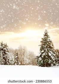 Winter nature landscape. Snowy forest, tree and a sunset.