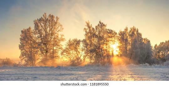 Winter nature landscape with warm sunlight in the morning. Frosty nature. Christmas background. Amazing winter scene. Hoarfrost on plants and trees. Sunbeams shining on frost. Xmas time.