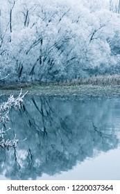 Winter in nature park Lonjsko polje in Croatia, reflection of trees under snow on lake, fairy mood