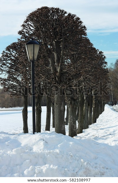 Winter in nature. Part of the walk, planted with trees. Everything around covered with snow.