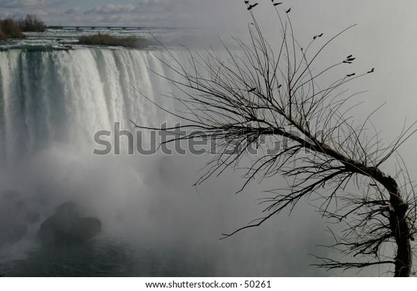 Winter at Niagara.  at Niagara falls. main focus on the foreground (tree).