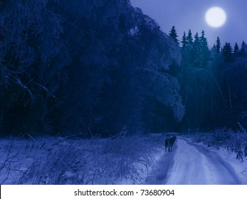 Winter night in the forest (with a lonely wolf on the road and moon in the sky)