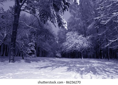 winter night landscape with dark snowy trees Park scene. Night shot.