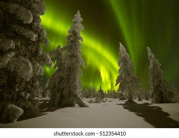 Winter night landscape with forest and polar northern lights. Northern lights, Canada, forest and trees