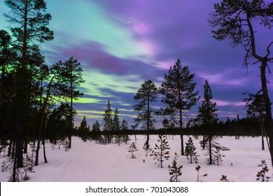 Winter night landscape with forest and polar northern lights. Kola Peninsula, Murmansk oblast, Russia
