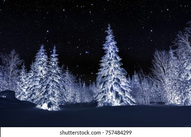 Winter night landscape. Spruce forest in winter
