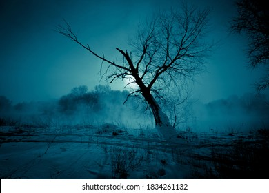 Winter night mystical scenery. Full moon light over foggy river through the branches of the tree on snow covered river bank.