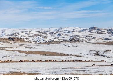 winter North Xinjiang's ,sonw and ice world,xinjiang,china