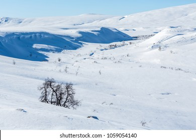 Winter on the Kungsleden hiking-Trail in Northern Sweden