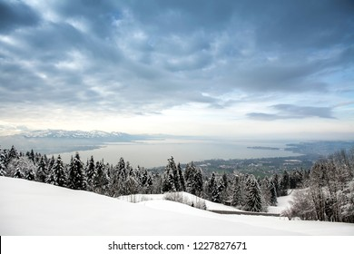 Winter on lake Constance.  View of lake Constance and three countries-Austria, Switzerland, Germany. Christmas trees in the snow in the Alps. The sky in the dark gray clouds through which the sun brea
