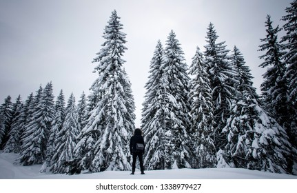 Winter on a mountain. Man standing close to snow covered trees.