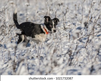 Mountain Collie Images Stock Photos Vectors Shutterstock