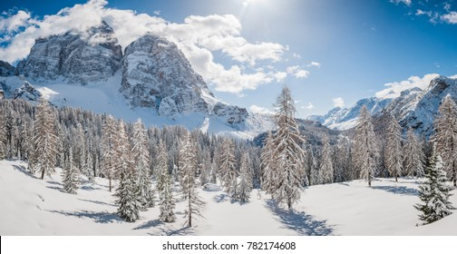 Winter panorama of  fir trees covered with white snow with dolomitic mountain background, Dolomites, Italy