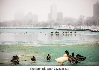 Winter panorama of frozen Chicago