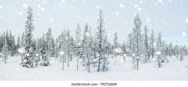 Winter panorama with a snow covered arctic fir trees.