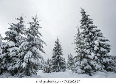 Winter panorama with snow covered trees. Christmas concept