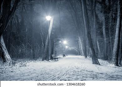 winter in the park in duotone