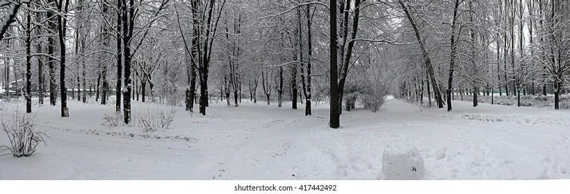 Winter in the Park of the Kiev - Ukraine