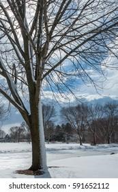 Winter park scene with crisp blue sky