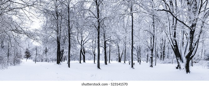 A winter park with snow covered trees