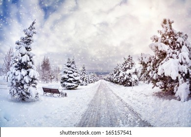 Winter park with snow trees, benches and road at blue cloudy sky