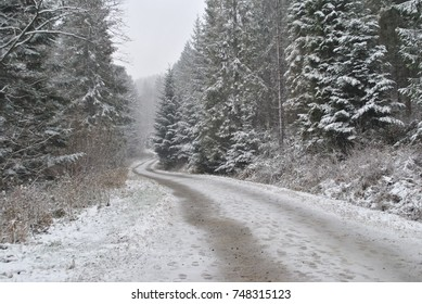 Winter path leading to unknown, through snowy forest. Snow on the road, trails of animals, cars and people. Cold outdoors landscape. Woods covered in white snowflakes. Pines and other trees. Scape.