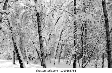 Winter photo landscape with snow-covered trees in the park