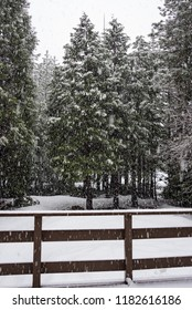 A winter photo of a mountain cabin deck railing and pine trees in California's Sierra Nevada, during a snowstorm.