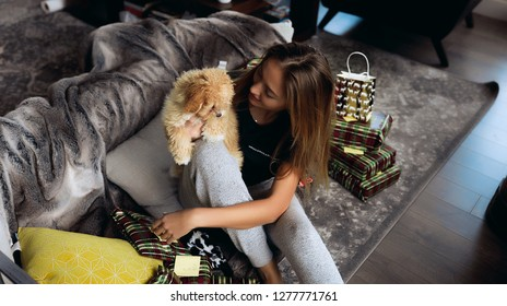 Winter picture full of love and care of our small friends - dogs. Maltipoo puppy with red and white curlies and tiny black nose. Sitting on grey couch with soft pillows. Celebrate christmas at home.