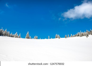 Winter pine trees in snow with blue sky