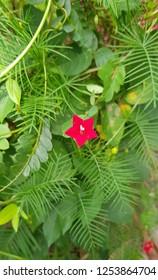 Winter pink flower in the florest