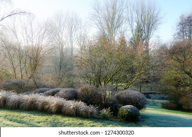 Winter at the pond in natural beautiful garden. A landscape view on a winter morning in frost & sunlight of a garden, plant borders, green frosty grass lawn brown.