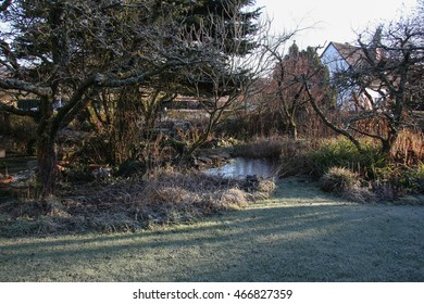 winter at the pond in natural garden