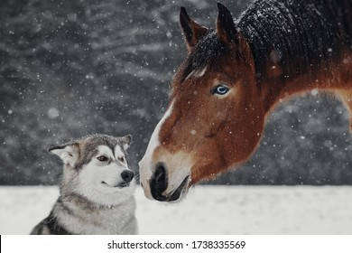 Winter portrait of red horse and dog