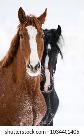 winter portrait of two horse