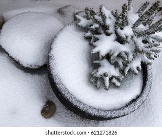 Winter potted tree covered by snow