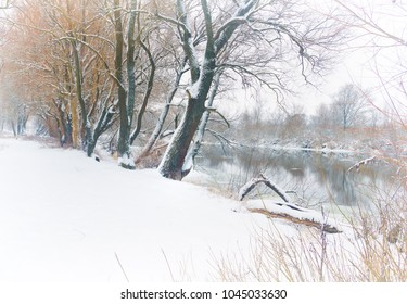 winter river. Trees growing on the snow-covered Bank of the winter river