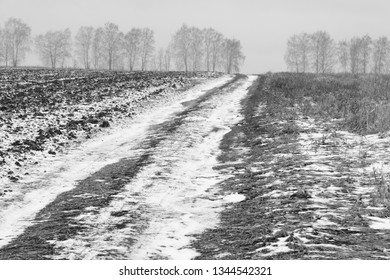 winter road among snow-covered fields goes to the birch grove/long-focus optics