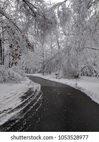 Winter road blocked by snow covered trees.
