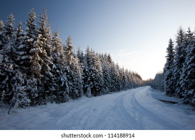 Winter road in country side with fir trees, Latvia, Baltic state, Europe