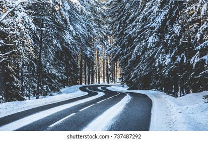 Winter road forest