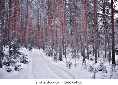 winter road landscape, beautiful view of a snowy road