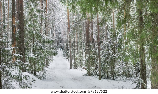 Winter road in pine forest