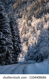 Winter road snow ice forrest sunny