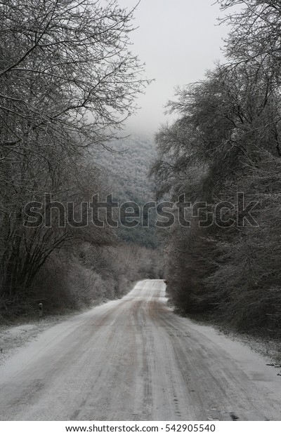 Winter road in the woods.