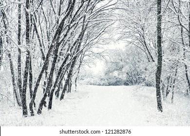 Winter Scene Images, Stock Photos & Vectors | Shutterstock