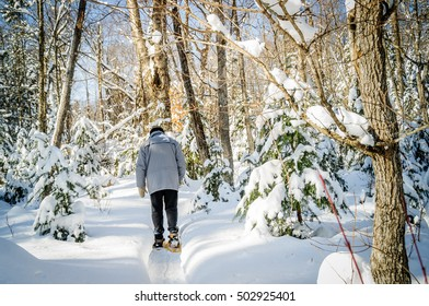 winter scene with Christmas trees and senior walking with snowshoes in a small path after snowstorm, Quebec,Canada
