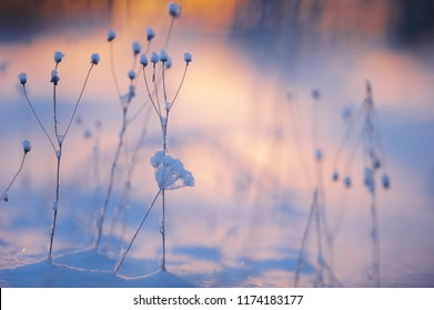 Winter scene with fesh snow on dried plants. Very shallow depth of view and blurred background.
